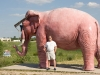 buy-this-elephant