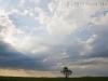 sky-and-tree-2