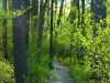 long-lake-trail_11