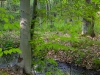 mossy-bank-and-beech-tree_1