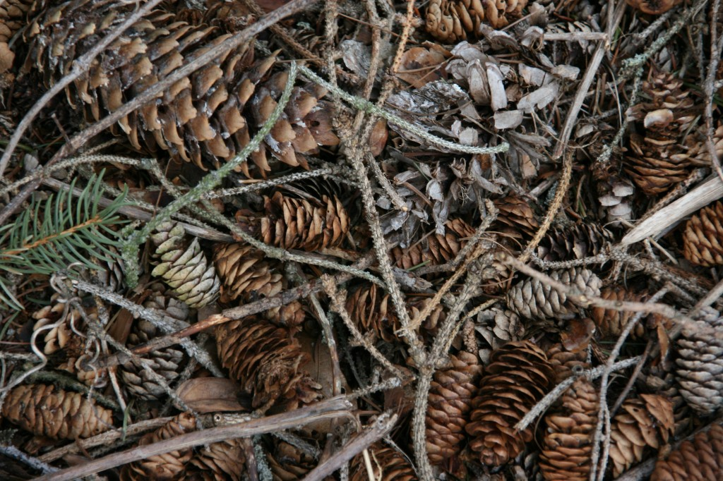 Pine cones turn the ground beneath an evergreen grove into a work of art at a roadside park near Ionia, Michigan.